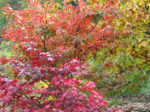 The Gardens Autumn Colour (1)