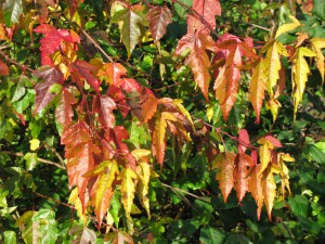 The Gardens Autumn Colour (5)