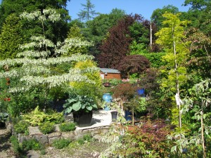 The Gardens Herbaceous Border  (14)