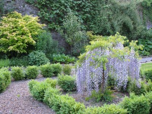 The Gardens Herbaceous Border  (5)