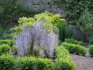 The Gardens Herbaceous Border  (6)