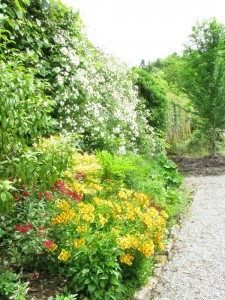 The Gardens Herbaceous Border  (7)