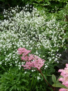 The Gardens Perennial plants