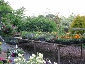 The Gardens Summer Annuals (6)
