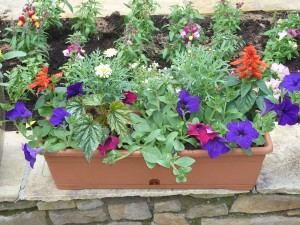 The Gardens Window Boxes (1)