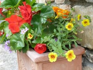 The Gardens Window Boxes (3)