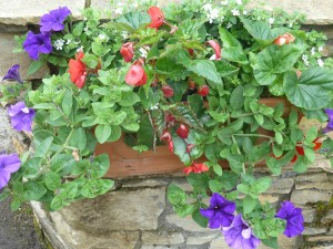 The Gardens Window Boxes (4)